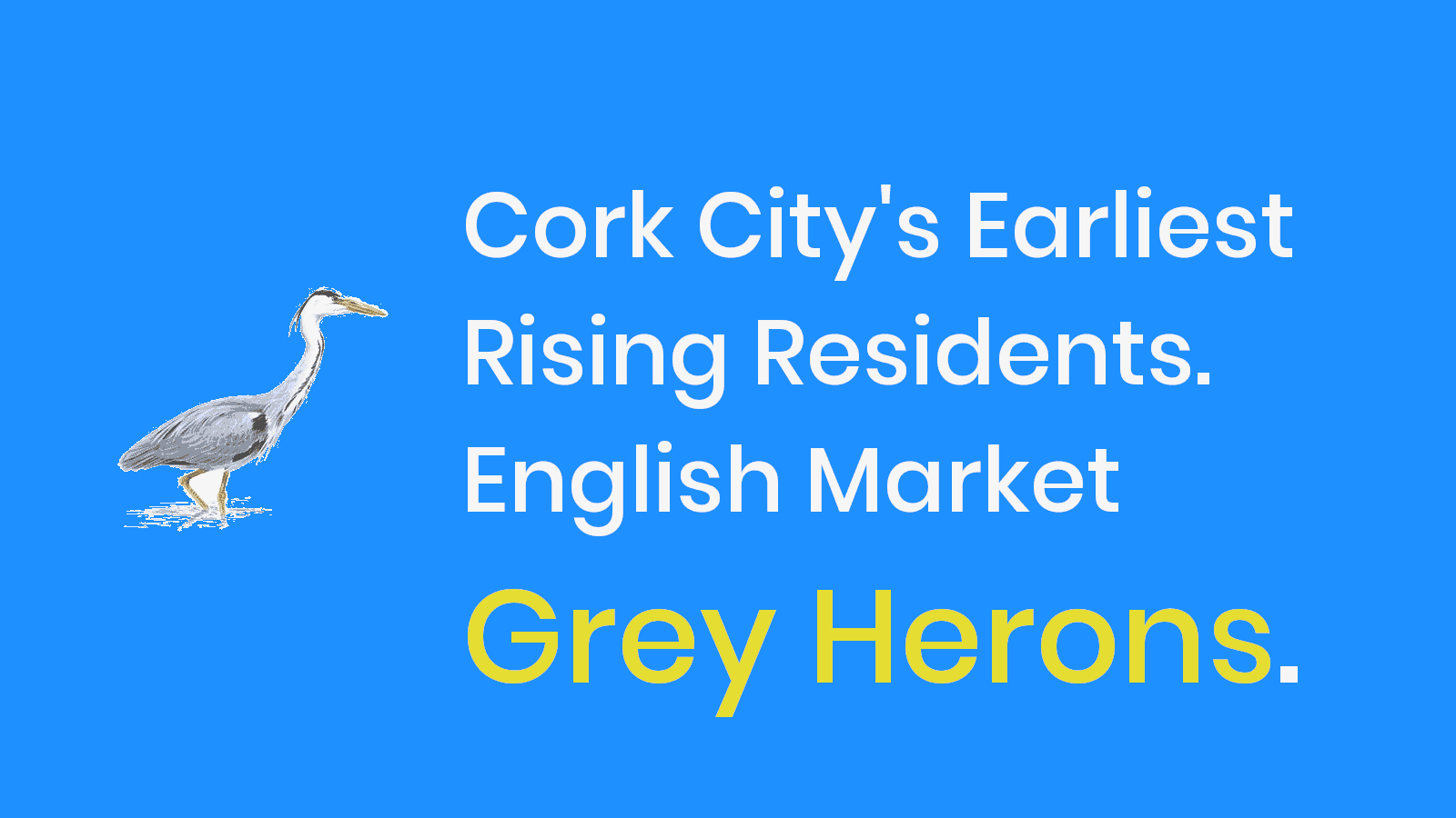 Cork City's English Market Grey Herons